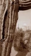 arid zone