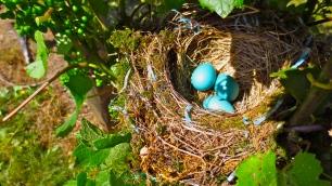 nest1