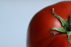 peeking-tomato1