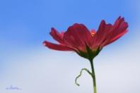 flowerpink